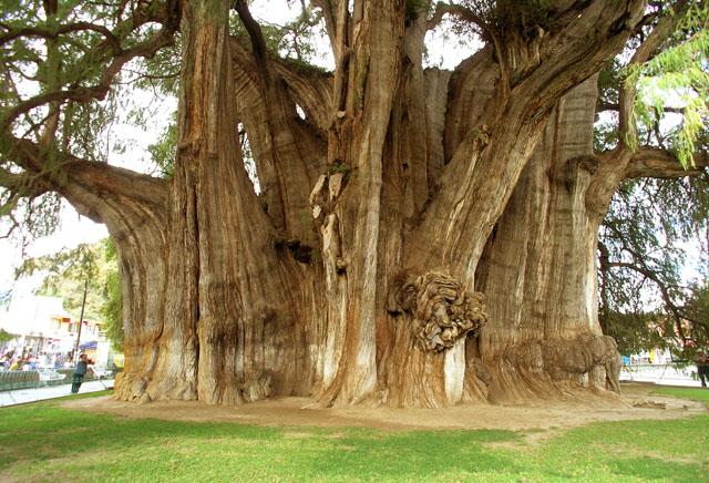 Base of the tree looking N, 20mm lens